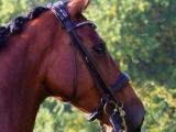 Utzon Equestrian – Bride London